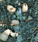 Photo of nut shells