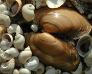 photo of many unidentified shells