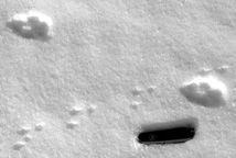 photo of red fox and white-footed mouse tracks in snow