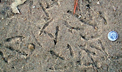 photo of Gull tracks in sand